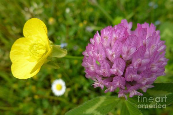 Photograph - Yellow And Purple Flowers by Jean Bernard Roussilhe