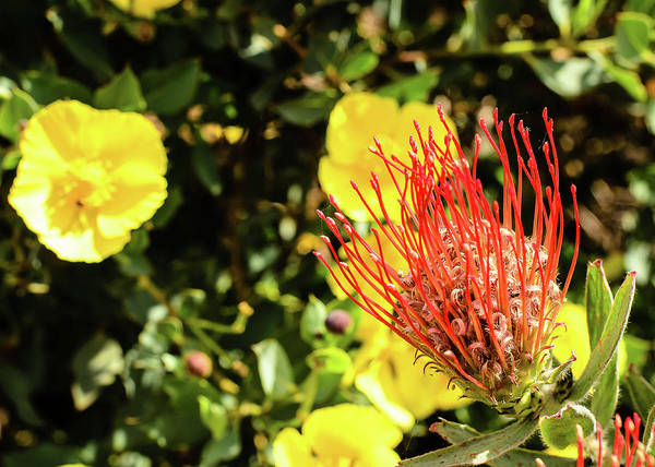 Photograph - Yellow And Red by Tom Potter