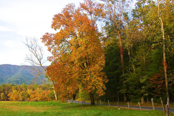 Photograph - Yellow And Red Tree by Bob Decker