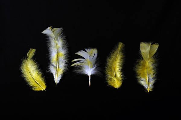Photograph - Yellow And White Fluffs by Randi Grace Nilsberg