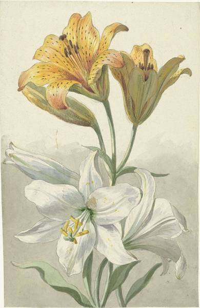 Painting - Yellow And White Lilies, Willem Van Leen, C. 1780 by Artistic Panda