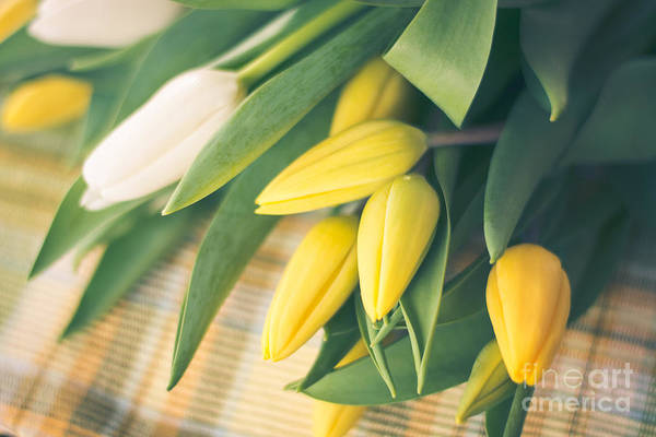 Treen Photograph - Yellow And White Tulips by Cheryl Baxter