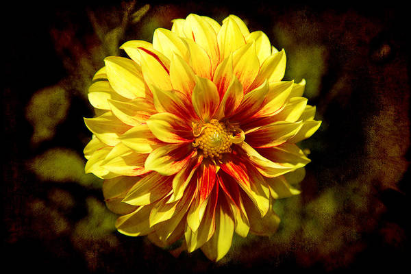 Photograph - Yellow Artistry by Milena Ilieva