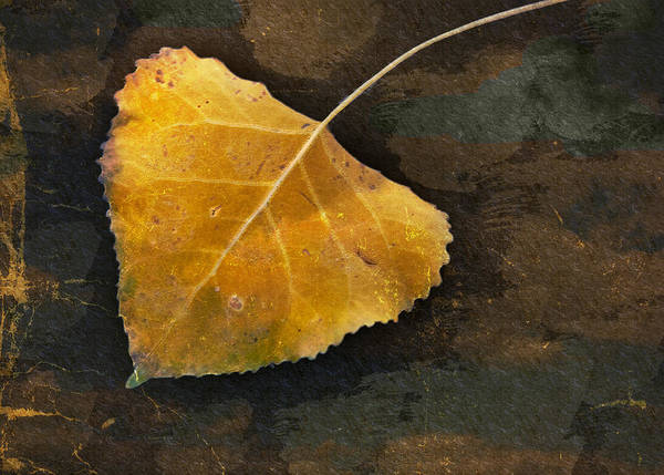Photograph - Yellow Autumn Leaf by Janice Bennett