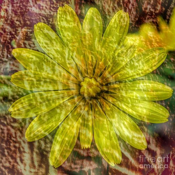 Wall Art - Digital Art - Yellow Beauty by Free Spirit