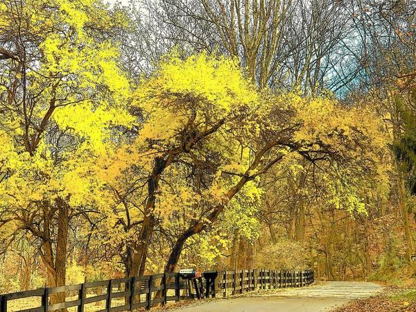 Wall Art - Photograph - Yellow Bend by Joyce Kimble Smith
