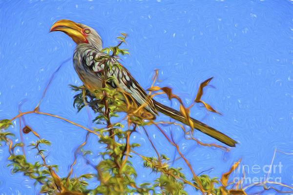 Photograph - Yellow-billed Hornbill Beauty by Kay Brewer