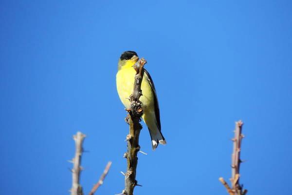 Bird Watcher Photograph - Yellow Bird by Bill Tomsa