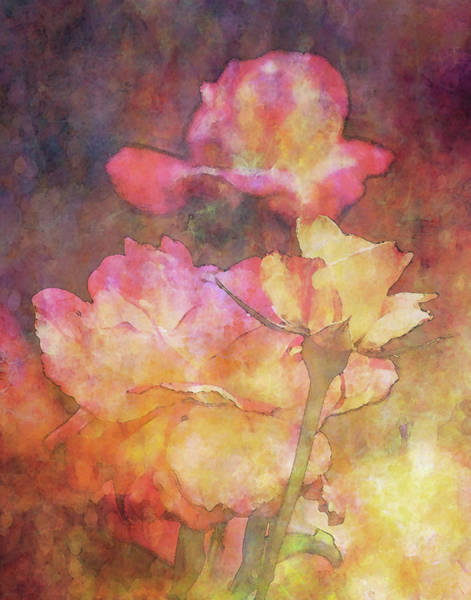 Photograph - Yellow Blush Tipped Roses 1108 Idp_2 by Steven Ward