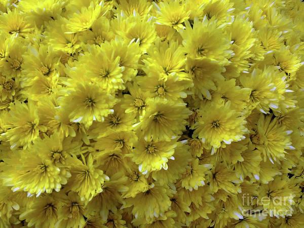 Wall Art - Photograph - Yellow Bouquet by Jasna Dragun