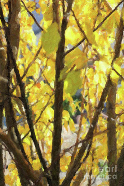 Painting - Yellow Branches And Leaves by Donna L Munro