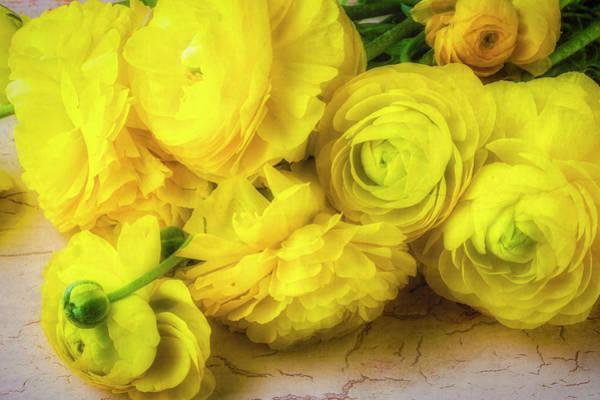 Ranunculus Photograph - Yellow Bunch Of Ranunculus by Garry Gay