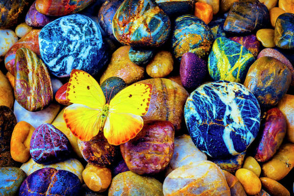 Hard Rock Photograph - Yellow Butterfly On Rocks by Garry Gay