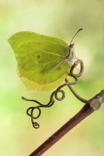 Photograph - Yellow Butterfly On The Branch by Jaroslaw Blaminsky