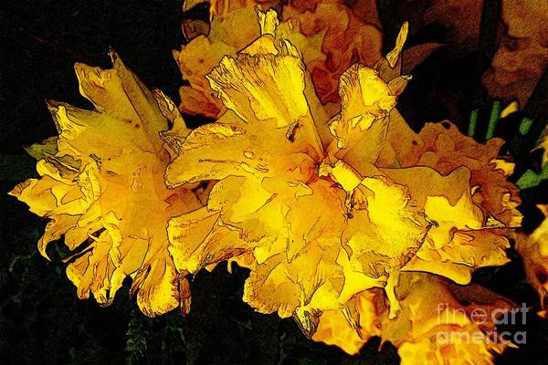 Photograph - Yellow Daffodils 4 by Jean Bernard Roussilhe