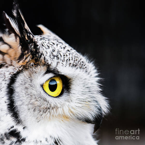 Photograph - Yellow Eye by Eyeshine Photography