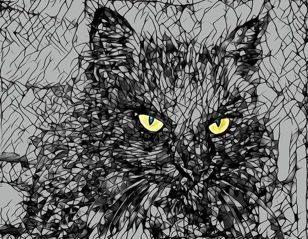 Photograph - Yellow Eyed Black Kitty by Alice Gipson
