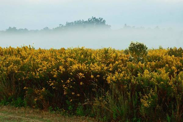 Digital Art - Yellow Field And The Fog by Michael Thomas