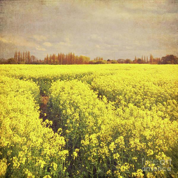 Wall Art - Photograph - Yellow Field by Lyn Randle