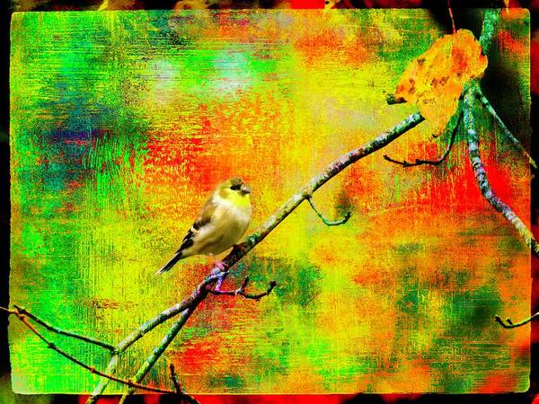 Digital Art - Gold Finch,autumn Colors. by Rusty R Smith