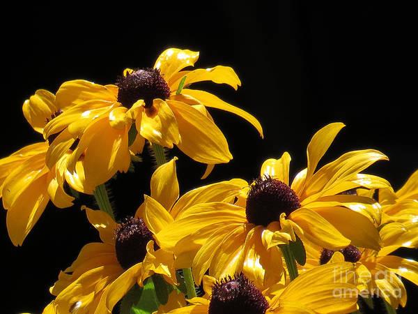 Yellow Flower 2 Art Print