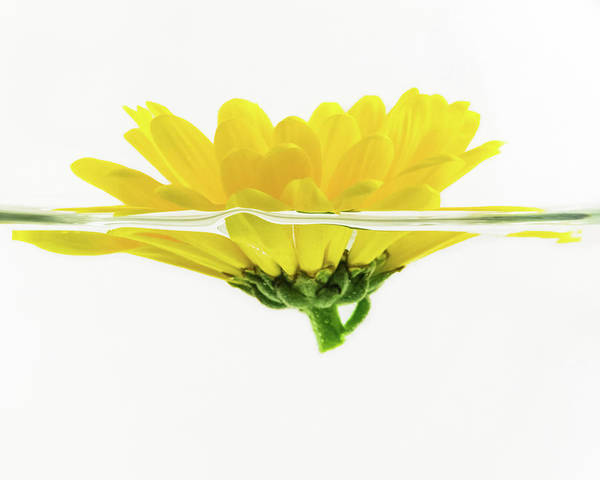 Photograph - Yellow Flower Floating In Water by Jeanette Fellows