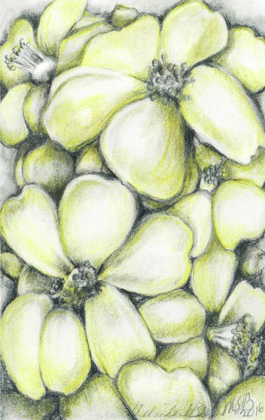 Drawing - Yellow Flowers Pencil by Melinda Blackman
