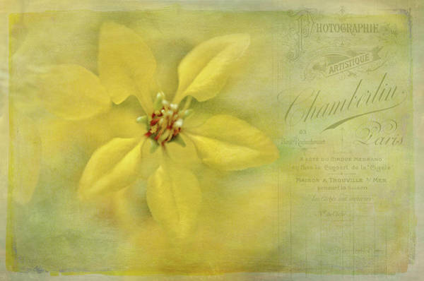 Wall Art - Photograph - Yellow Flowers Vintage Style by Maria Angelica Maira