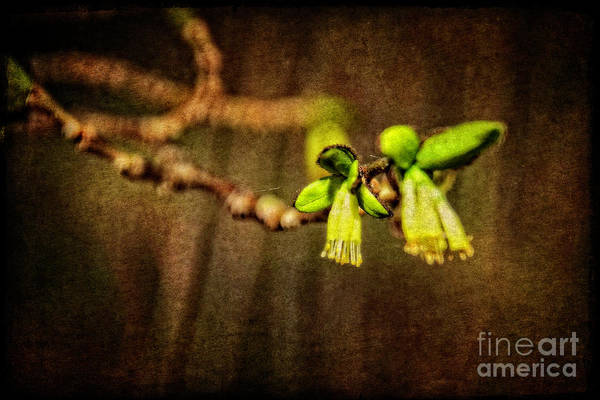 Wall Art - Photograph - Yellow Fringed Blossom by Mary Machare
