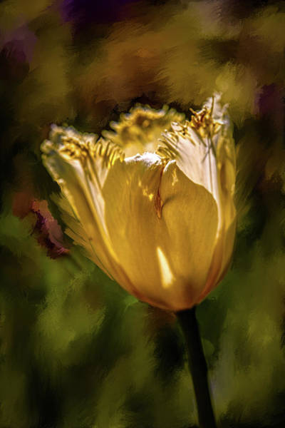 Photograph - Yellow #h5 by Leif Sohlman