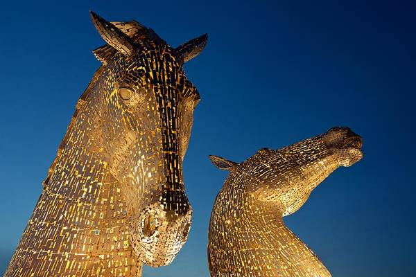 Photograph - Yellow Heads by Stephen Taylor