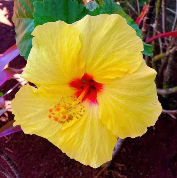 Photograph - Yellow Hibiscus Aloha  by Joalene Young