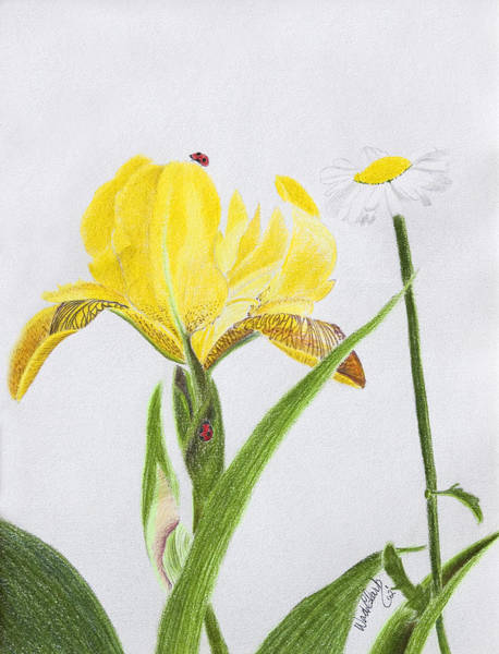 Painting - Yellow Iris by Wade Clark
