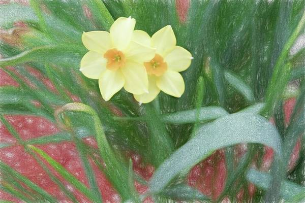 Digital Art - Yellow Jonquils by Rusty R Smith
