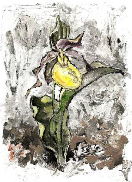 Yellow Lady's Slipper Art Print