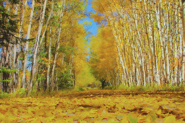 Photograph - Yellow Leaf Road by Amanda Smith