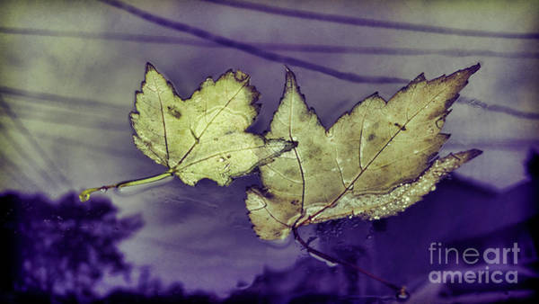Photograph - Yellow Leaves On  Windshield by Jeff Breiman