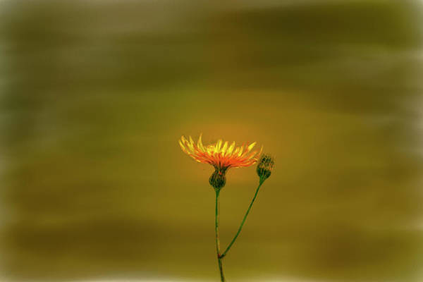 Photograph - Yellow Light #9. by Leif Sohlman