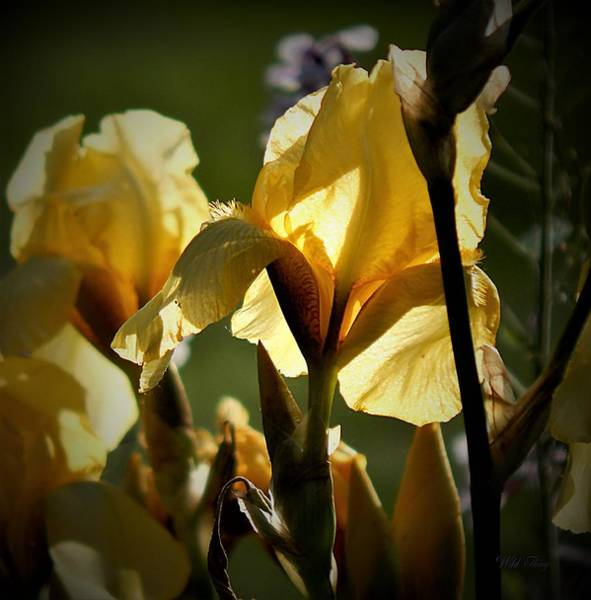Photograph - Yellow Light by Wild Thing