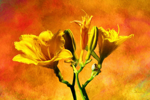 Photograph - Yellow Lilies by Ericamaxine Price
