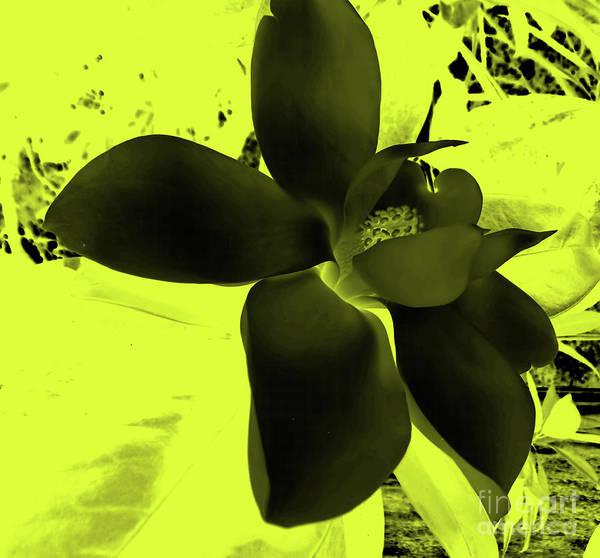 Photograph - Yellow Magnolia Art by D Hackett