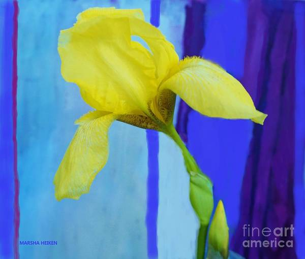 Purple Iris Mixed Media - Yellow Mod Iris by Marsha Heiken