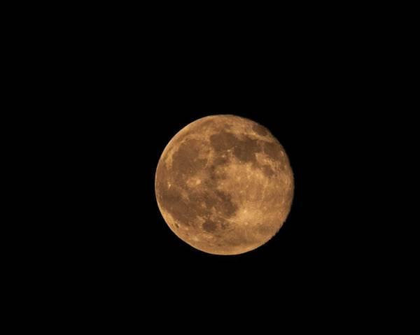 Photograph - Yellow Moon by Gunter Nezhoda