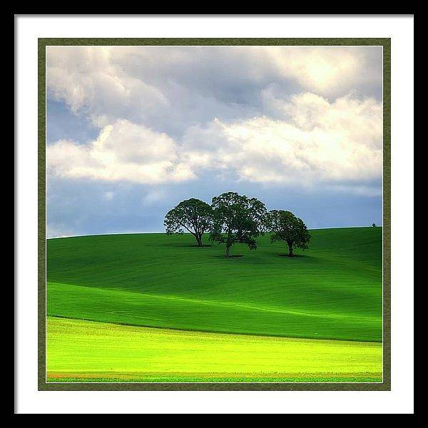 Photograph - Yellow Mustard And Trees Framed by Jerry Sodorff