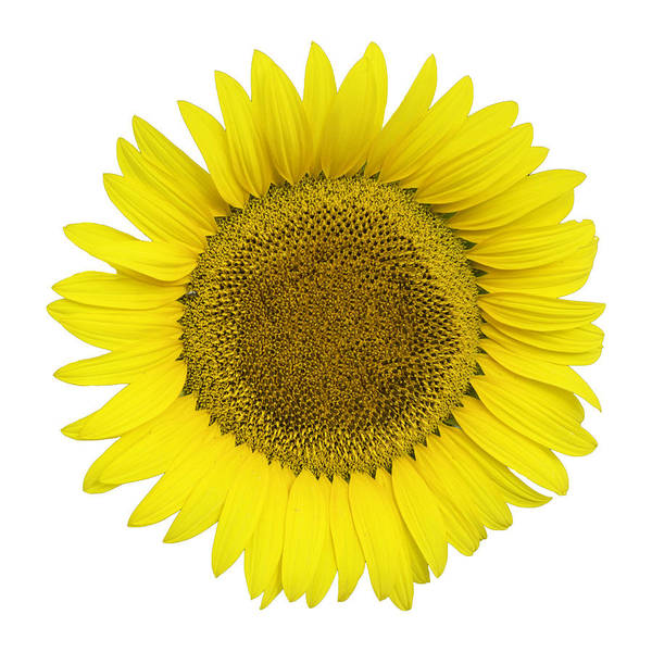Photograph - Yellow On White by Jim Dollar