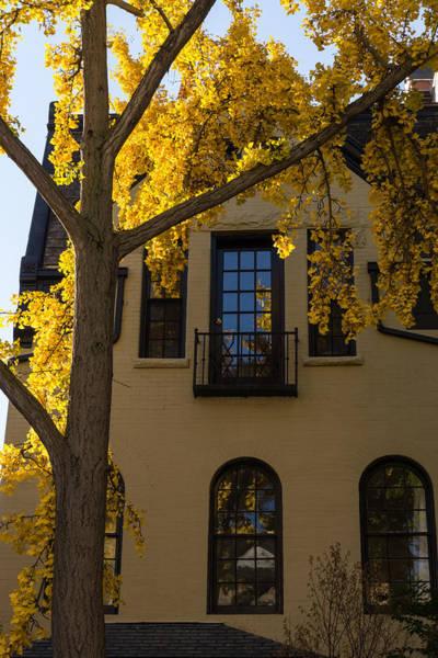 Photograph - Yellow On Yellow - Golden Ginkgo Biloba And An Elegant Facade by Georgia Mizuleva