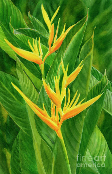Wall Art - Painting - Yellow Orange Heliconia With Leaves by Sharon Freeman