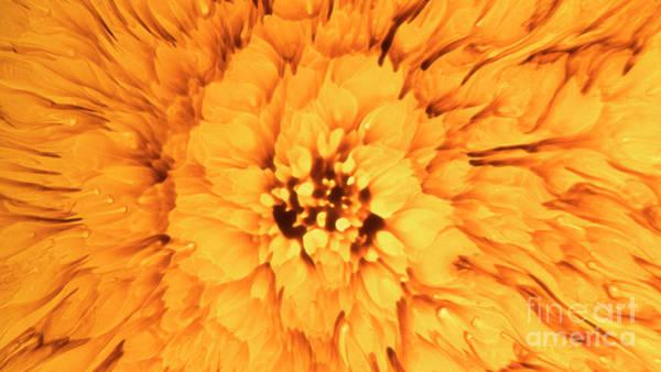 Yellow Flower Under The Microscope Art Print