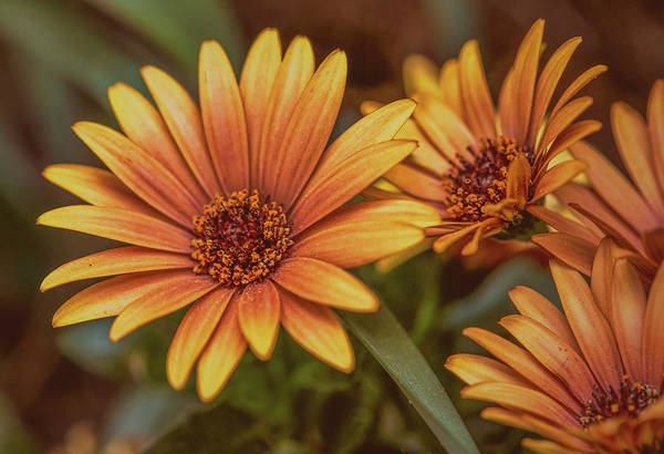 Photograph - Yellow Petals #g3 by Leif Sohlman