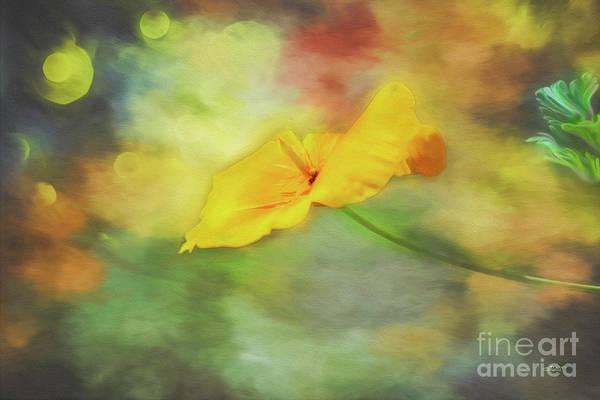 Photograph - Yellow Poppy by Jutta Maria Pusl